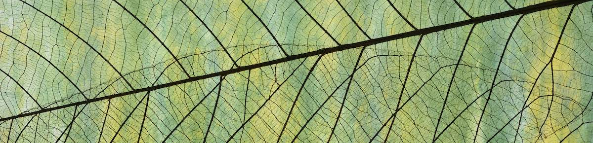 Leaf close up - iStock